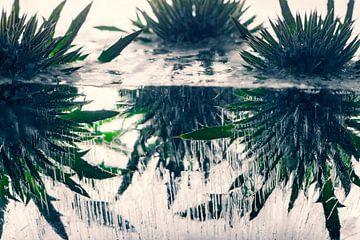 Distel in kristallklarem Eis 2 von Marc Heiligenstein