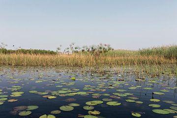 Okavango-delta is een van de zeven natuurlijke wonderen van Afrika, Botswana. van