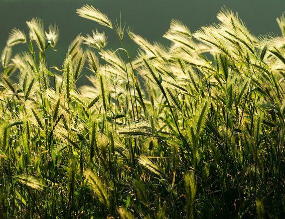 grass van Dirk van Egmond