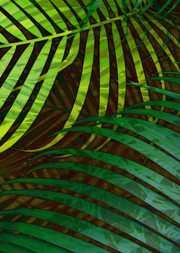 TROPICAL GREENERY LEAVES no5 von