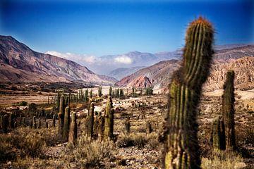 Vallei van kaktussen van