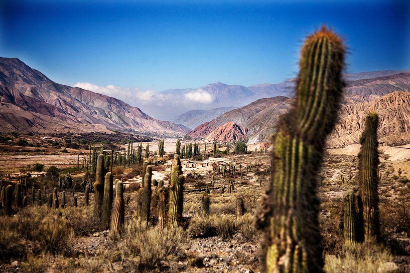 Vallei van kaktussen van Feike Faase