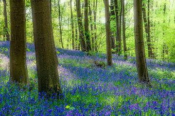 Lentesfeer met boshyacinten  en Blue bells van Peschen Photography