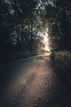 Sonnenuntergang im Wald von Steffen Peters
