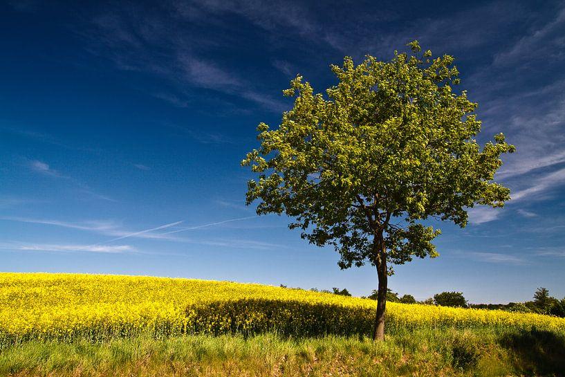 Tree on a canola field van Rico Ködder
