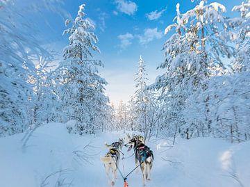 Kontakt mit Husky im Schnee von Rietje Bulthuis