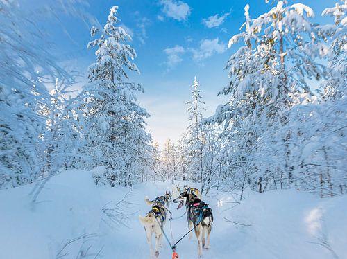Contact met husky in de sneeuw