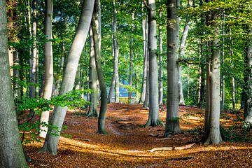 Studie van huis in het bos van