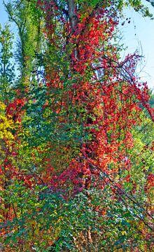 Rotes Laub von Leopold Brix
