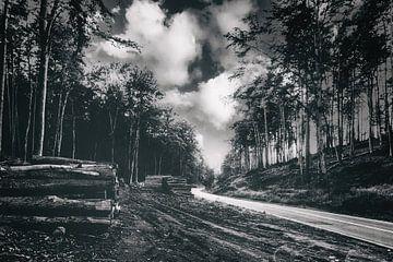 Une nuit dans les bois - Un endroit à retenir sur Jakob Baranowski - Off World Jack