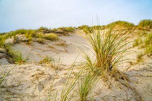Stilte in de Nederlandse duinen van I Should Shutter