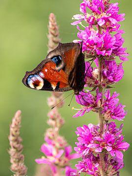 Bunter Schmetterling von Larissa Geuke