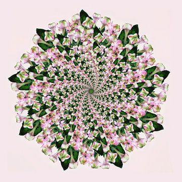 Spirale Mandala rosa