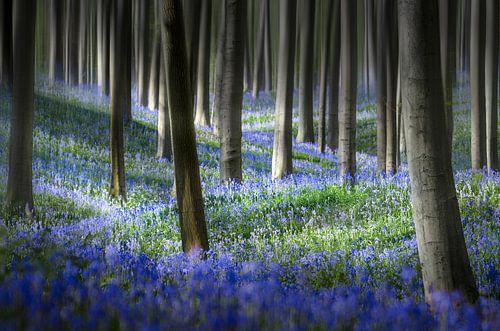 Hyacinth Dream