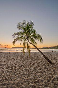 Palme am Strand bei Sonnenuntergang von Bianca Kramer