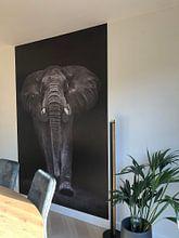 Kundenfoto: Ngorongoro Bull, Mario Moreno von 1x, auf nahtloser fototapete