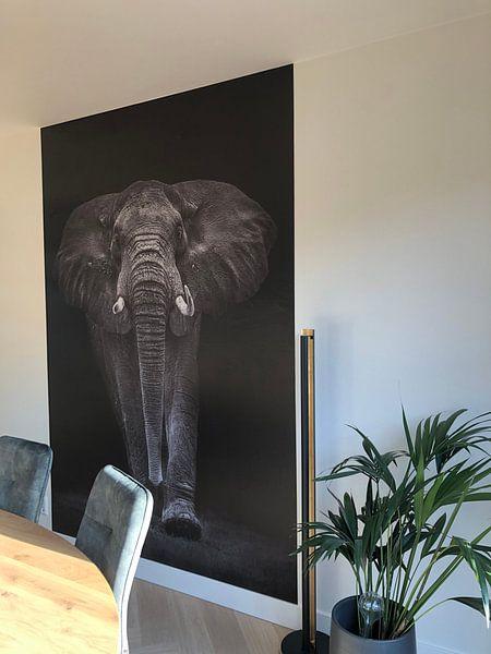 Kundenfoto: Ngorongoro Bull, Mario Moreno von 1x