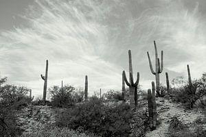 Cactusland  van