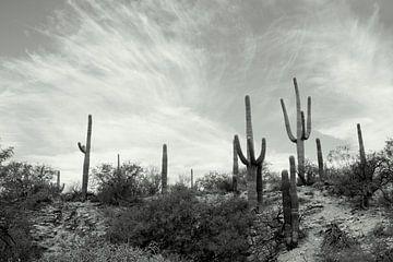 Cactusland  von Marlies van den Hurk Bakker