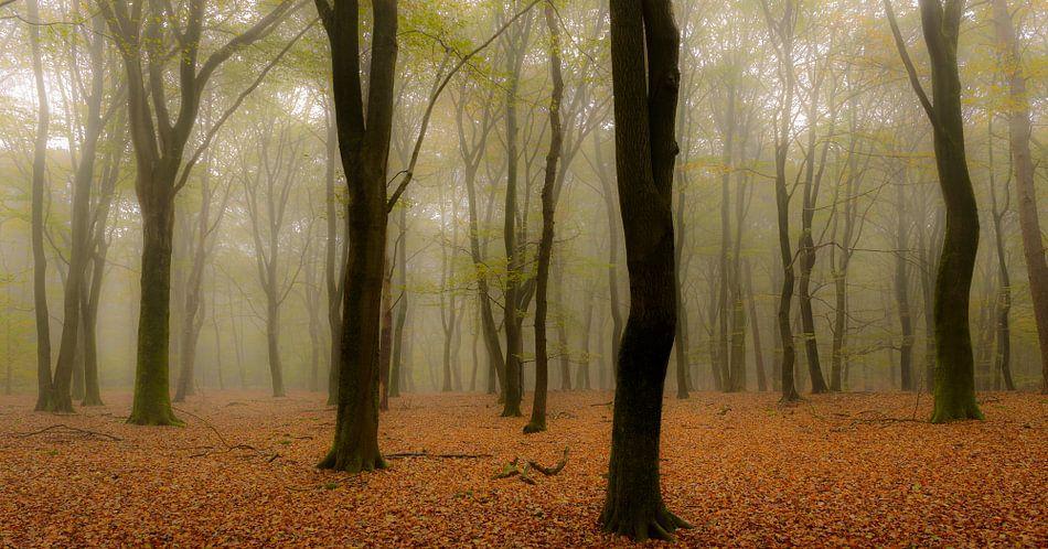 Beukenbomen tijdens een mistige herfst ochtend.