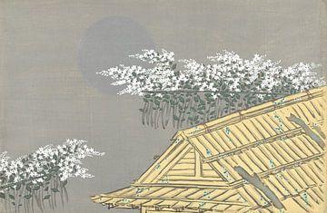 Weiße Blumen am Haus von Kamisaka Sekka, 1909