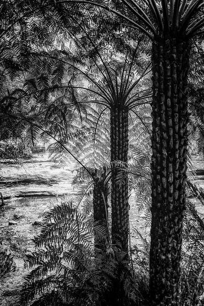 Regenwoud in de mist XV van Ines van Megen-Thijssen