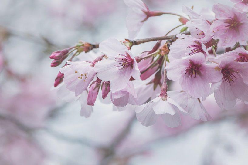 Spring van Marina de Wit