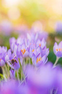 Und wieder Frühling von Friedhelm Peters