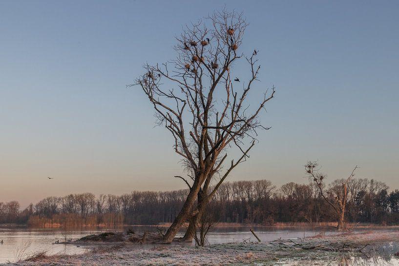 sunrise at Bourgoyen park van Koen Ceusters