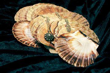 Zeeuwse knoop op Sint-Jacobsschelpen van Evert Jan Looise