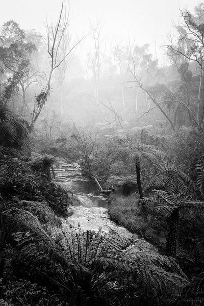 Regenwoud in de mist XI van Ines van Megen-Thijssen