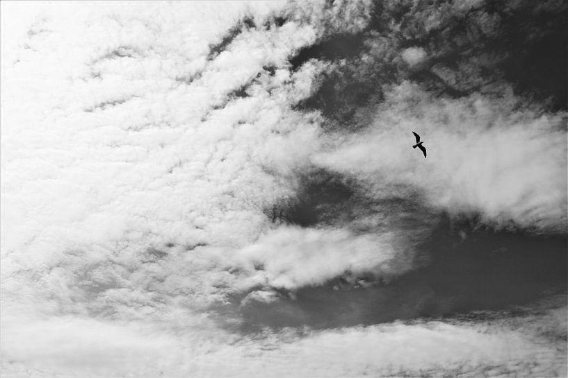 Vrij als een vogel van Marije Zwart