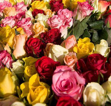 Gekleurde rozen van Sandra de Heij