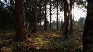 Bos in Overloon Noord-Brabant van