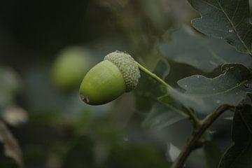 eikeltje in boom van nikita van der Starre- Zagers