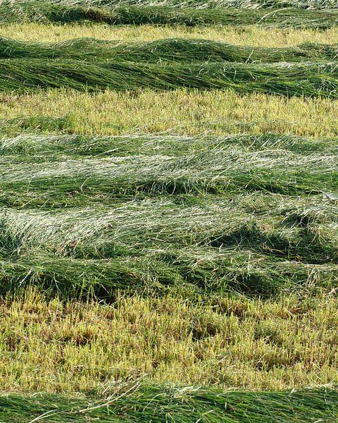 Rythme vert sur Harrie Beuken