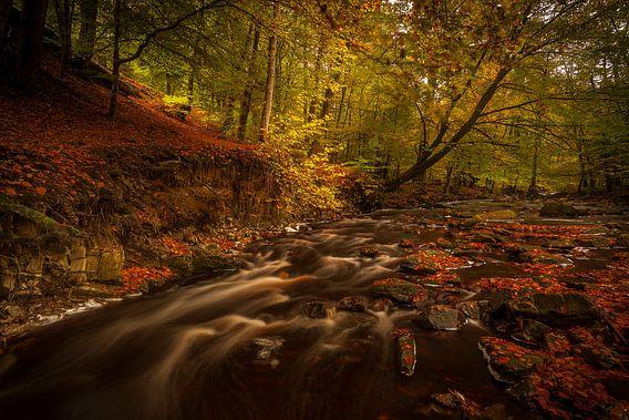 Herfstlandschap stromend water