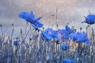 Maïspapaver in het blauw van Claudia Evans