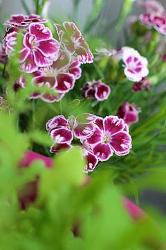 Frühlingsblumen von Marianna Pobedimova