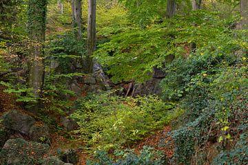 Felsenmeer ( Hemer ), wild zerklüftete Felsen unter alten Buchen, Naturschutzgebiet, Deutschland. von wunderbare Erde