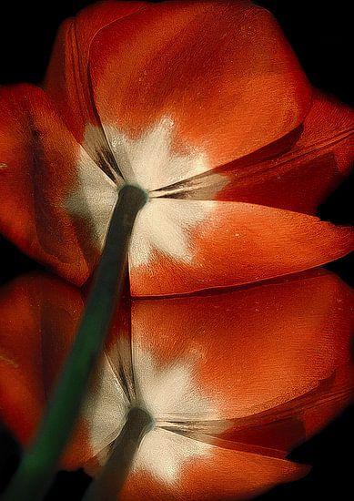 Tulpen  van marleen brauers