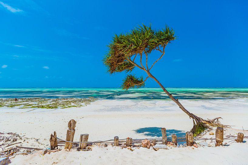 Zanzibar beach van Andy Troy