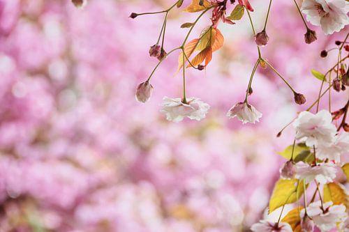 Romantische witte bloesem in het roze