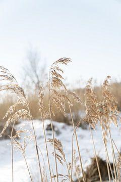Palmengras schön ausgesetzt an einem Wintertag von HappyTravelSpots