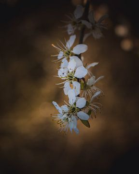 Springtime van Sandra H6 Fotografie