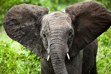 Jonge olifant sur Feike Faase