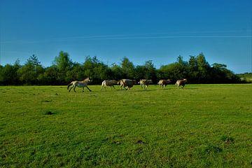 Pferdestärke von Pieter Voogt