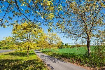 Landschap met weg en bomen bij Kuchelmiß van Rico Ködder