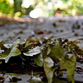 Herfst in het haagsche bos van Jan Radstake