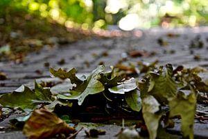 Herfst in het haagsche bos